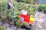 dct 300 viticulture